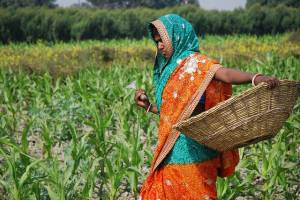 A-farmer-weeding-a-corn-field-in-Bihar-India
